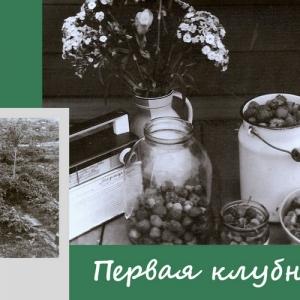 "История СНТ ""ДРУЖБА"""